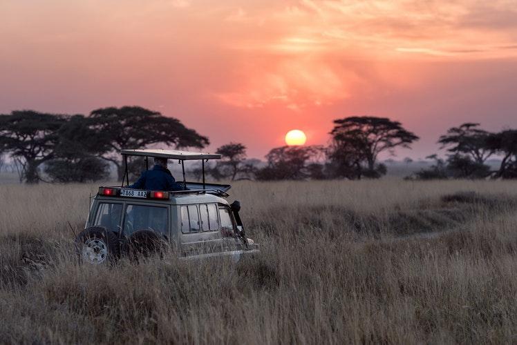 Los Mejores Prismáticos para ir de Safari