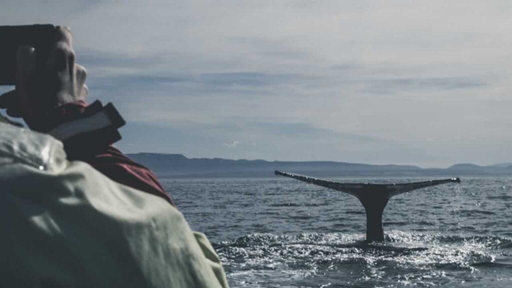Los mejores Prismáticos para observar Ballenas
