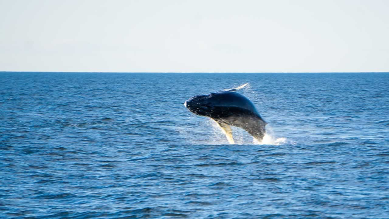 Prismáticos para observar Ballenas